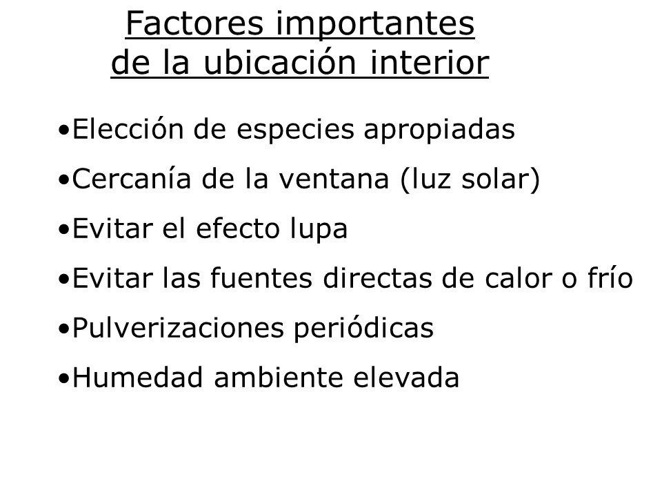 Factores importantes de la ubicación interior