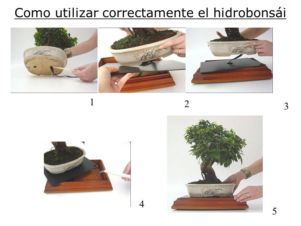 Como utilizar correctamente el hidrobonsái