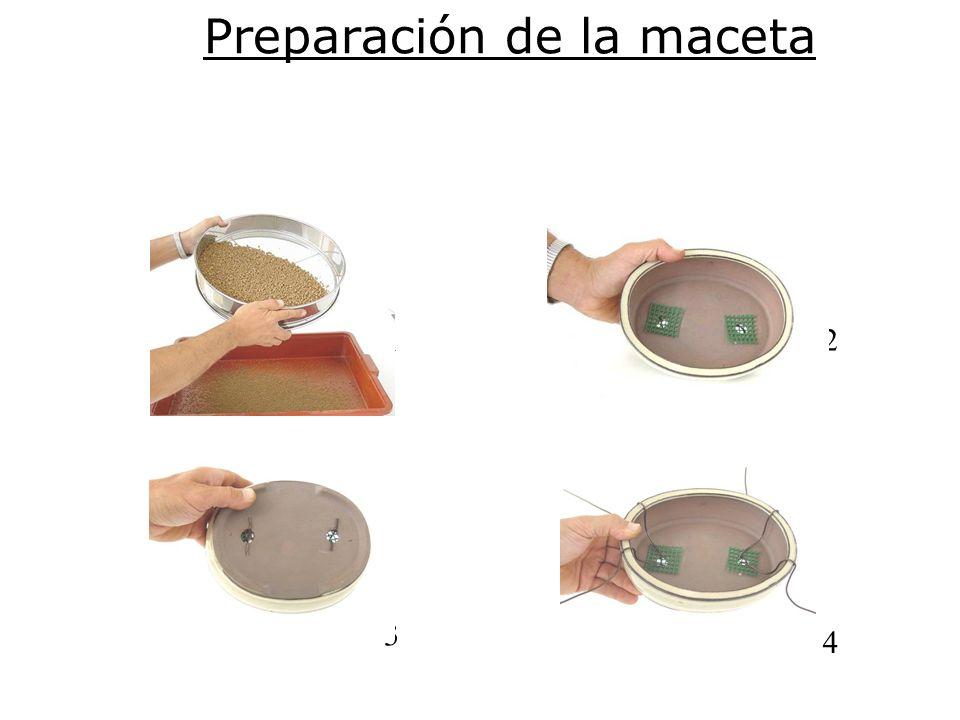 Preparación de la maceta