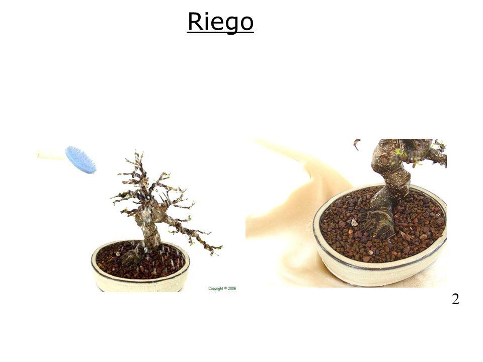 Riego1.