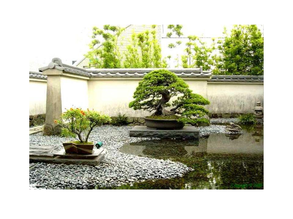 Los bonsáis que veremos a continuación son verdaderas obras de arte vivo, como las que podéis apreciar en nuestra exposición.