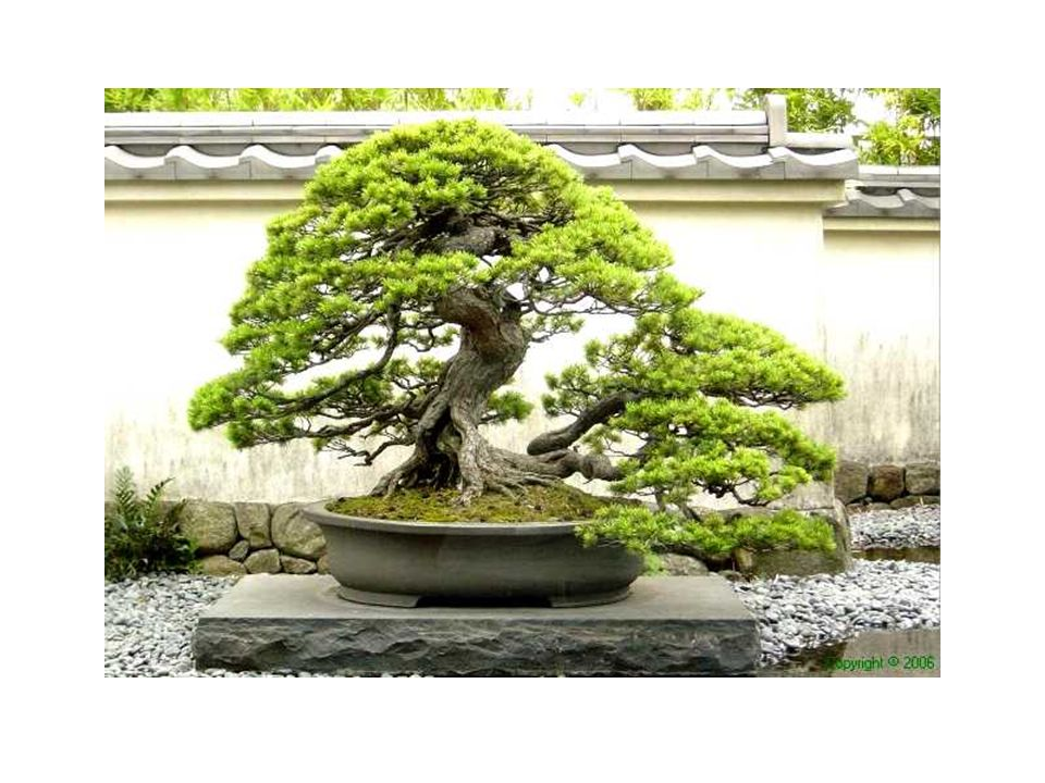 Parecería que los movimientos de los troncos y la silueta de sus ramas evocan a la naturaleza, sin denotar esfuerzo, trabajo o perseverancia.
