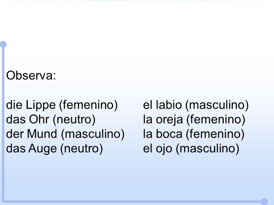 Observa: die Lippe (femenino) el labio (masculino) das Ohr (neutro) la oreja (femenino) der Mund (masculino) la boca (femenino)