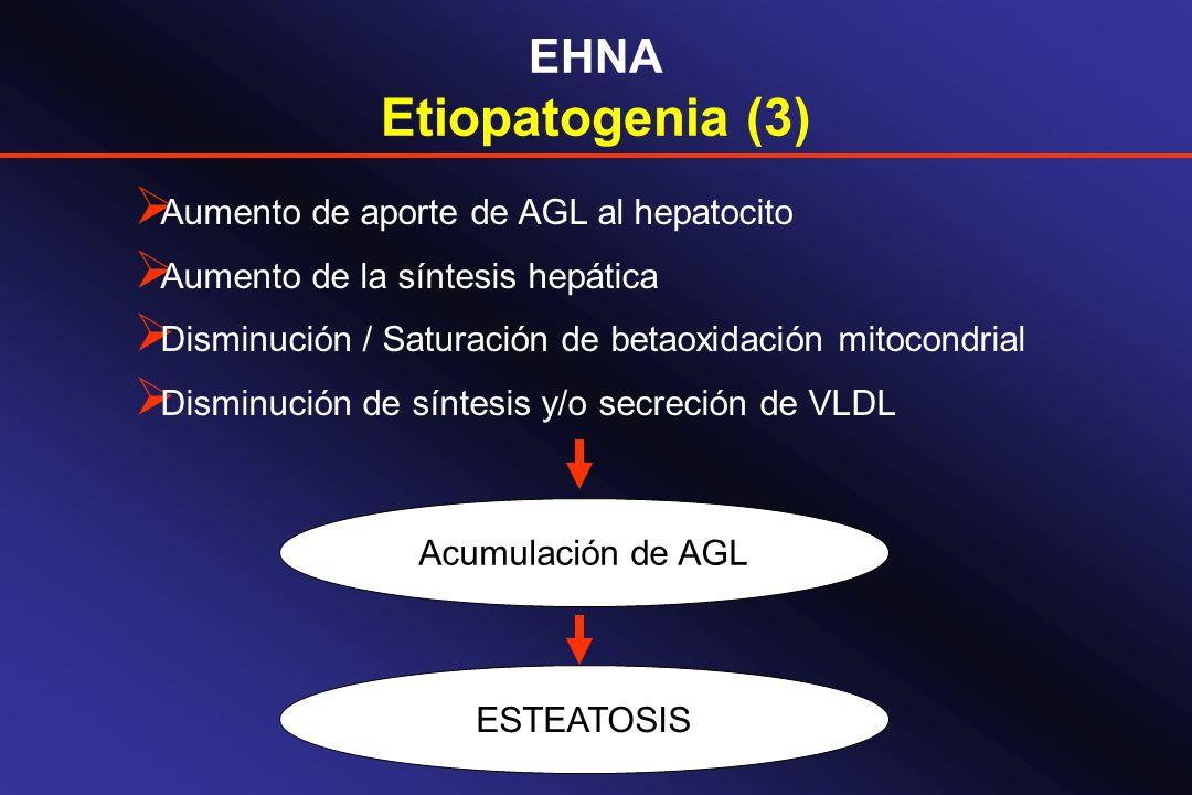 Etiopatogenia (3) EHNA Aumento de aporte de AGL al hepatocito