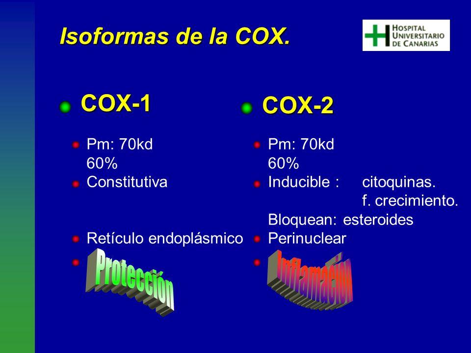 COX-1 COX-2 Inflamación Protección Isoformas de la COX. Pm: 70kd 60%