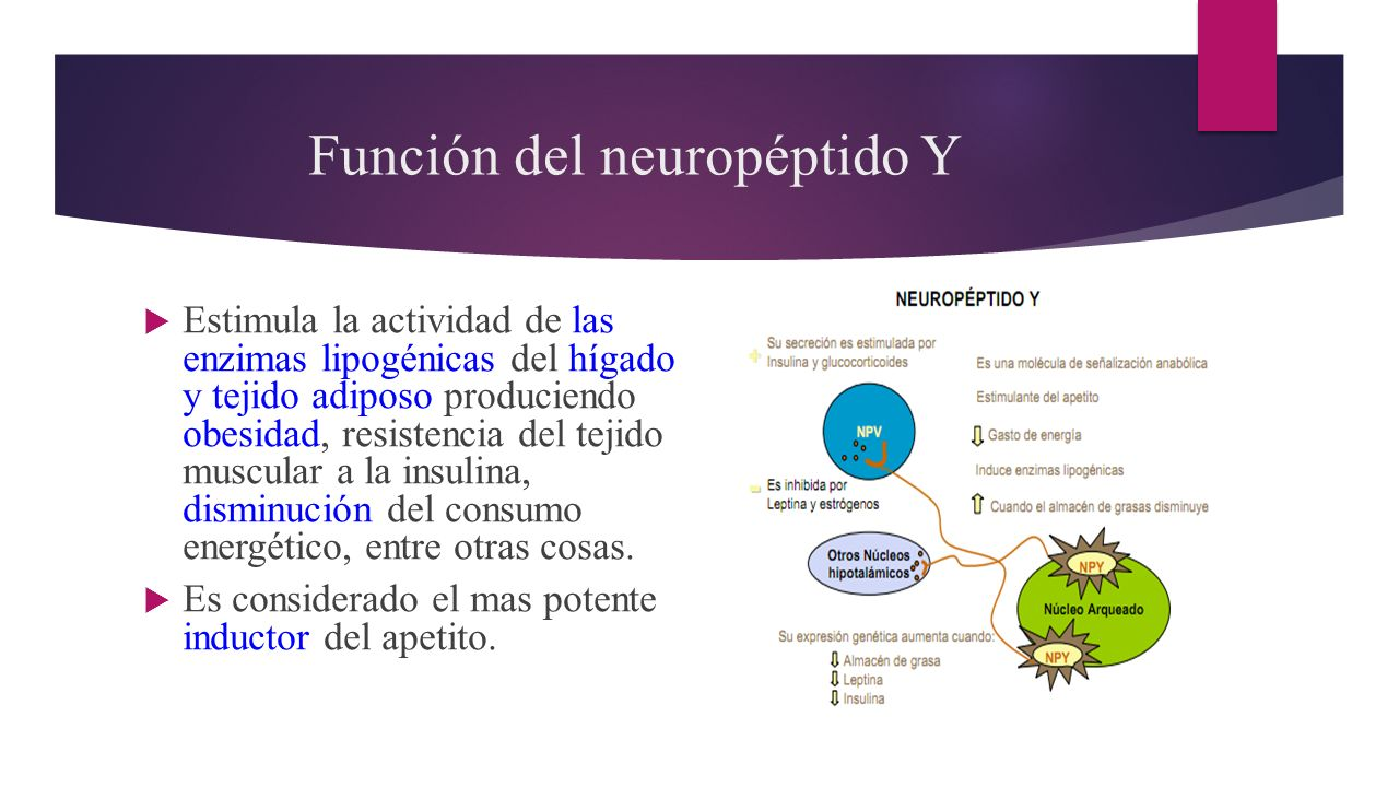 Neuropeptido y