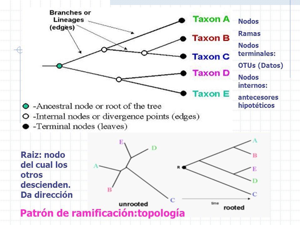 Patrón de ramificación:topología
