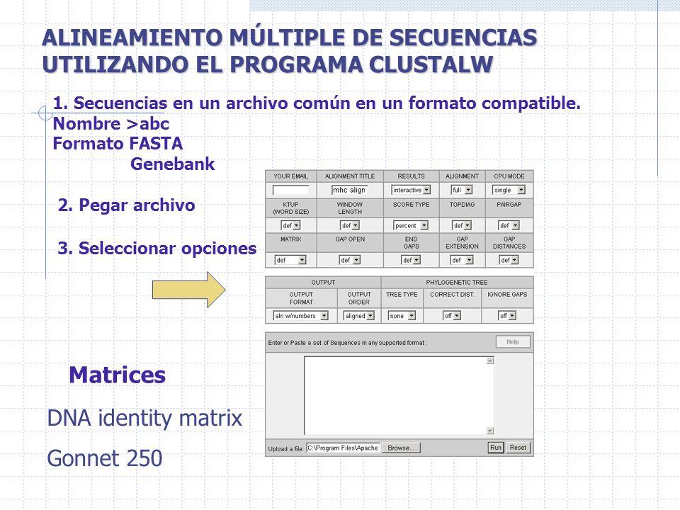 ALINEAMIENTO MÚLTIPLE DE SECUENCIAS UTILIZANDO EL PROGRAMA CLUSTALW
