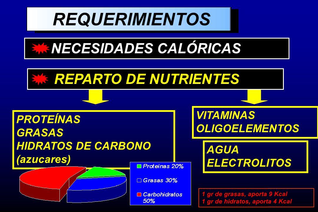 REQUERIMIENTOS NECESIDADES CALÓRICAS REPARTO DE NUTRIENTES VITAMINAS