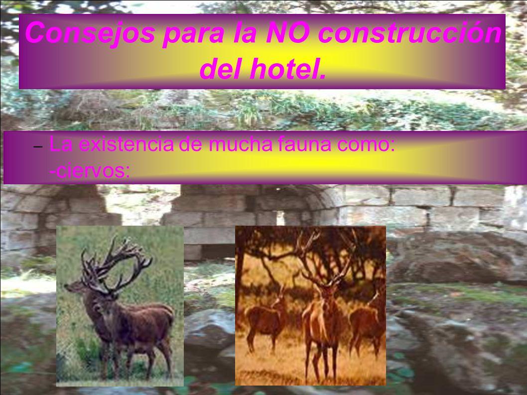 Consejos para la NO construcción del hotel.