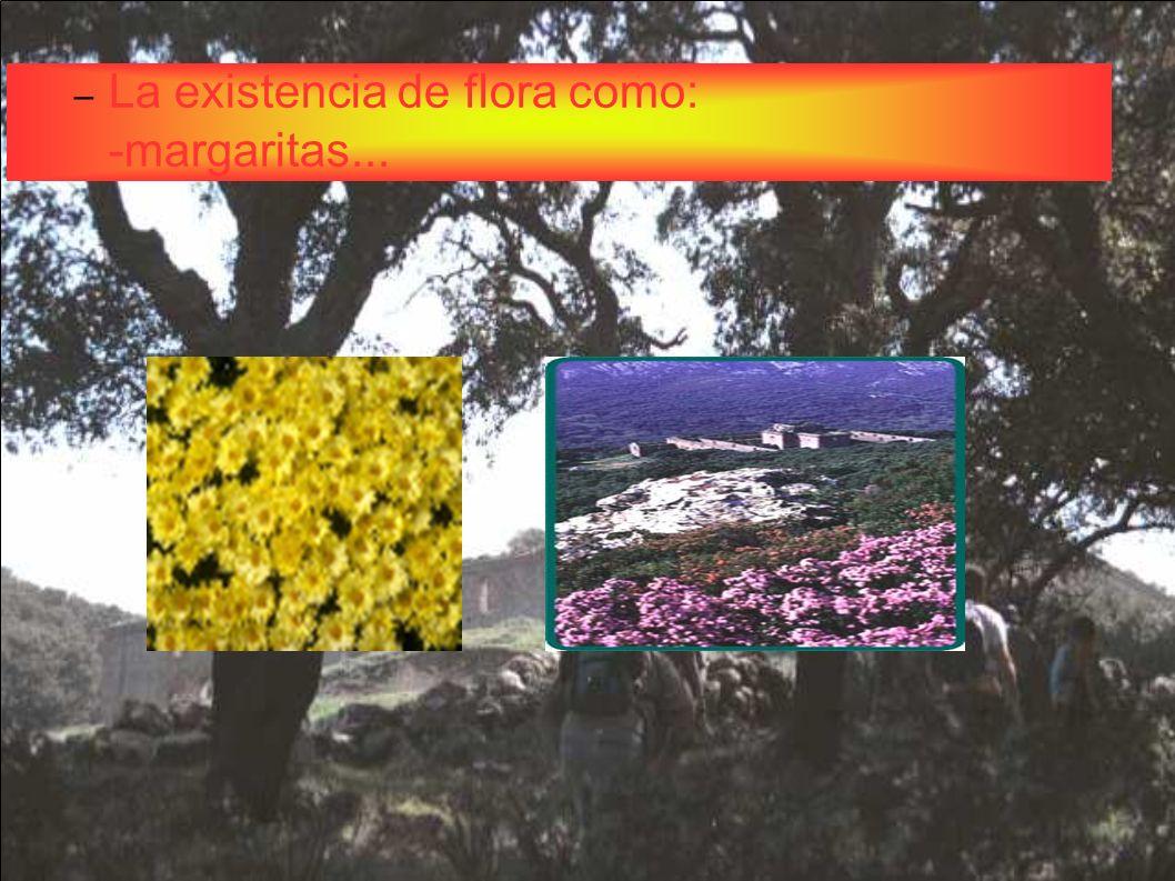 La existencia de flora como: -margaritas...
