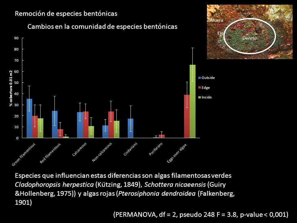 Remoción de especies bentónicas