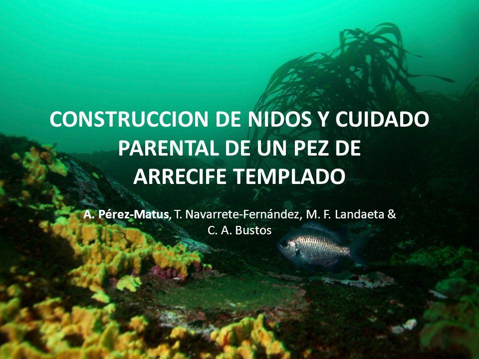 A. Pérez-Matus, T. Navarrete-Fernández, M. F. Landaeta & C. A. Bustos