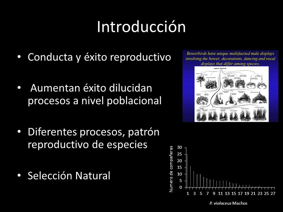 Introducción Conducta y éxito reproductivo