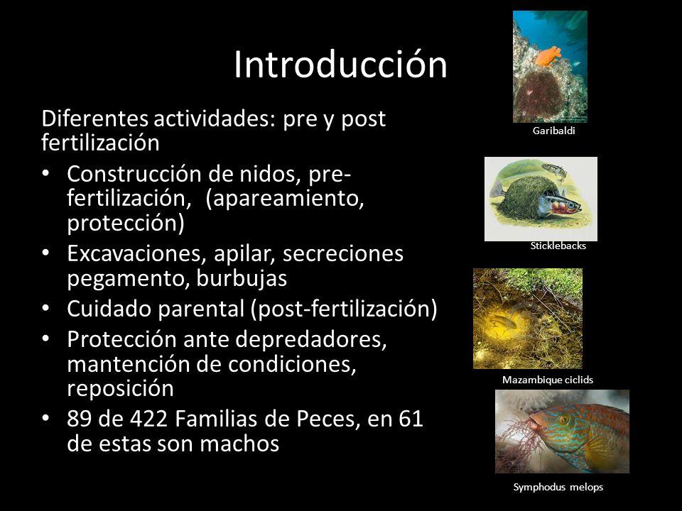 Introducción Diferentes actividades: pre y post fertilización
