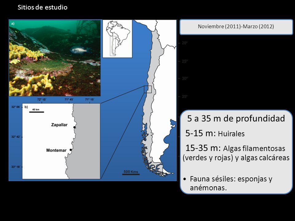 15-35 m: Algas filamentosas (verdes y rojas) y algas calcáreas
