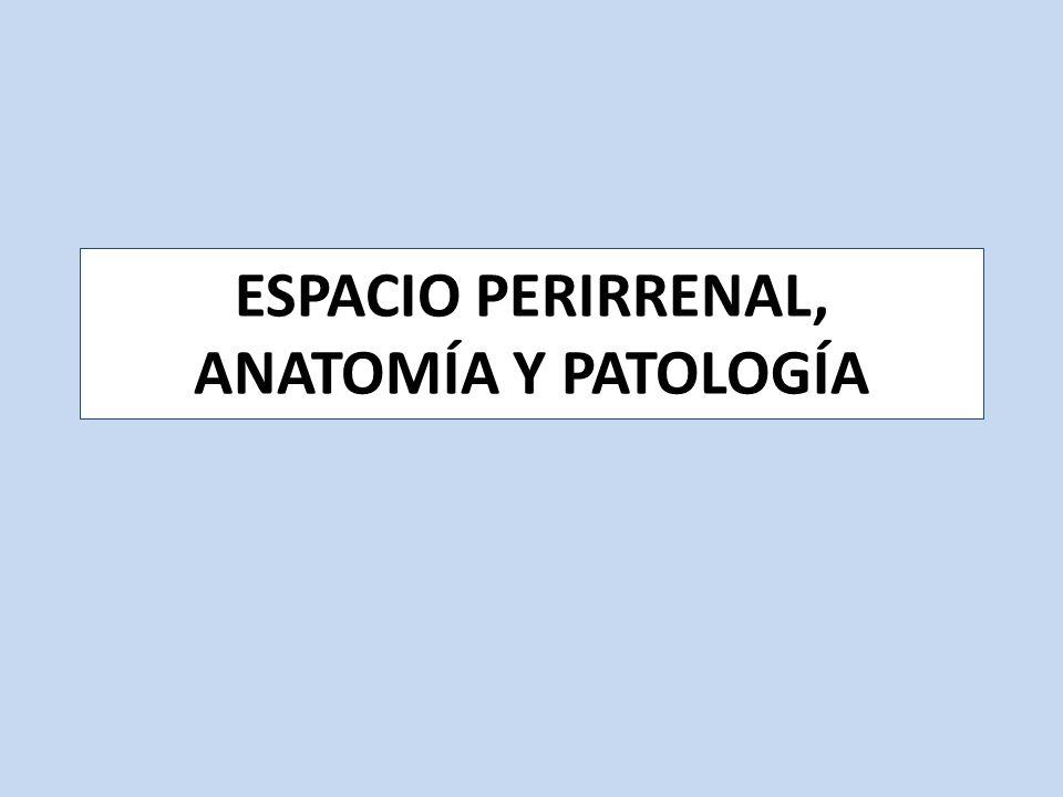 ESPACIO PERIRRENAL, ANATOMÍA Y PATOLOGÍA - ppt video online descargar