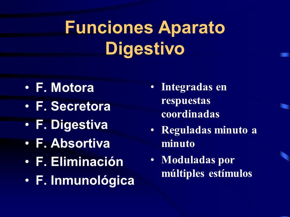 Funciones Aparato Digestivo