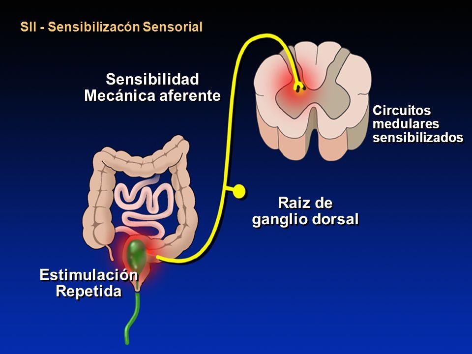 Sensibilidad Mecánica aferente EstimulaciónRepetida