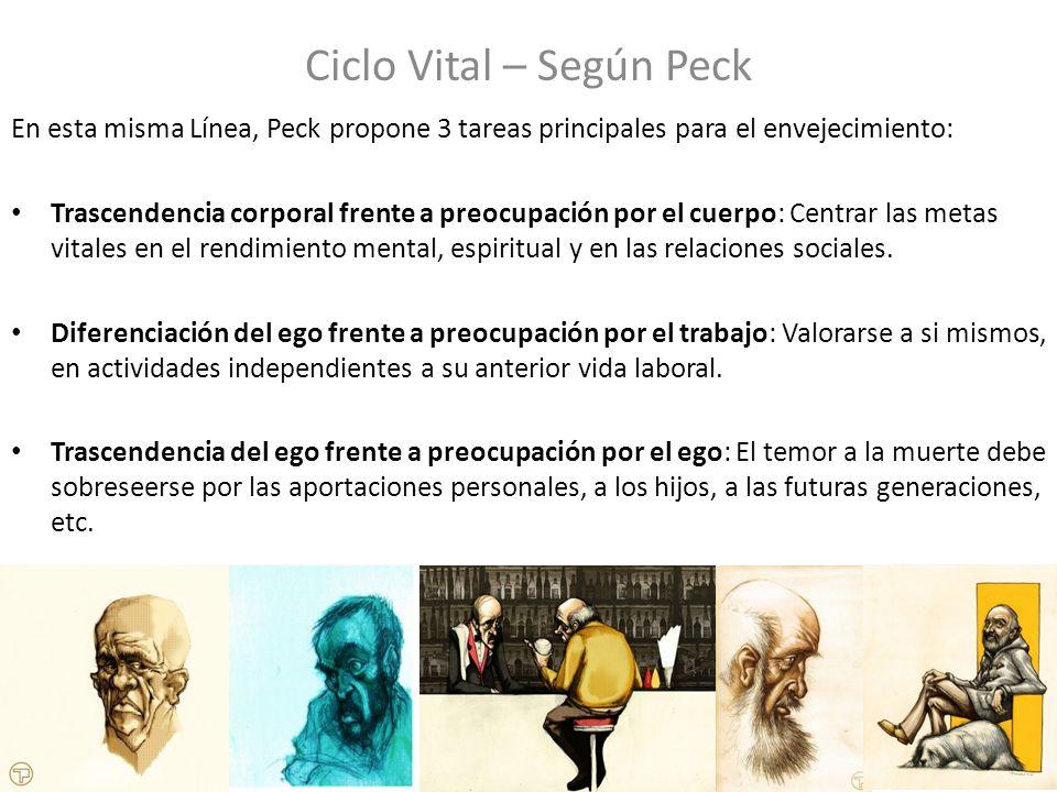 Ciclo Vital – Según Peck