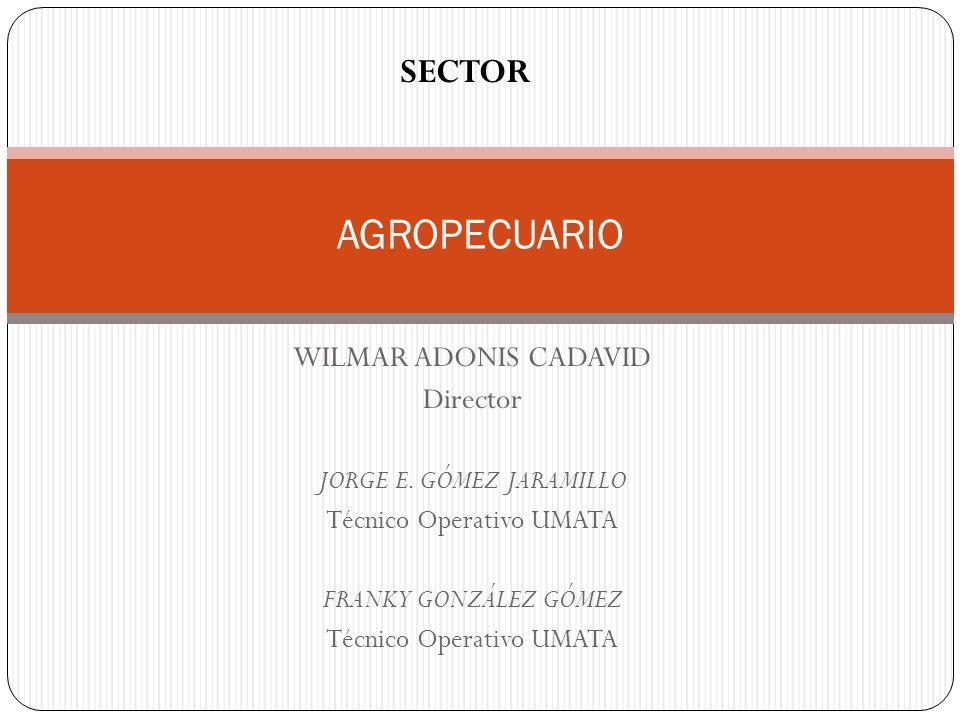 AGROPECUARIO SECTOR WILMAR ADONIS CADAVID Director