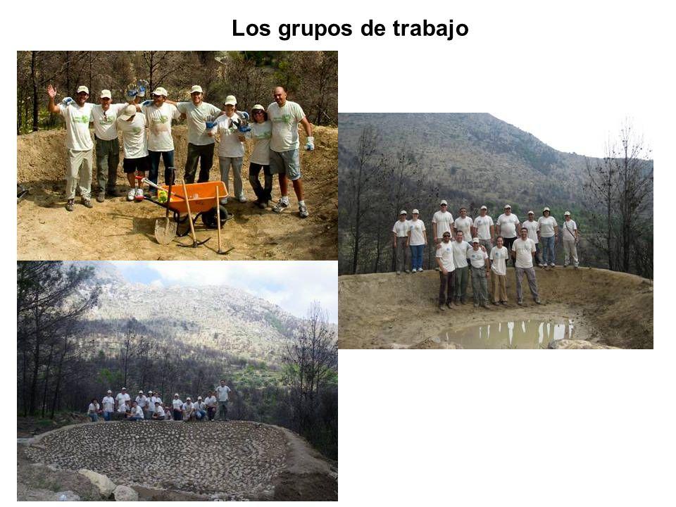 Los grupos de trabajo