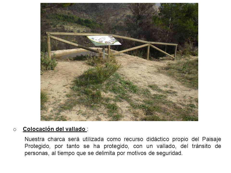 Colocación del vallado :