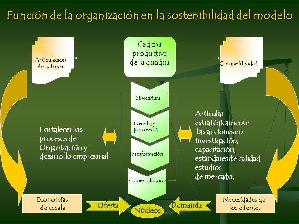 Función de la organización en la sostenibilidad del modelo