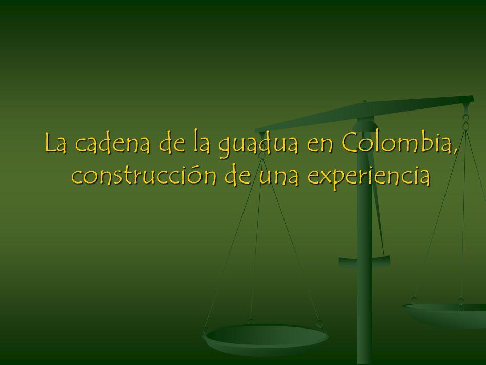 La cadena de la guadua en Colombia, construcción de una experiencia
