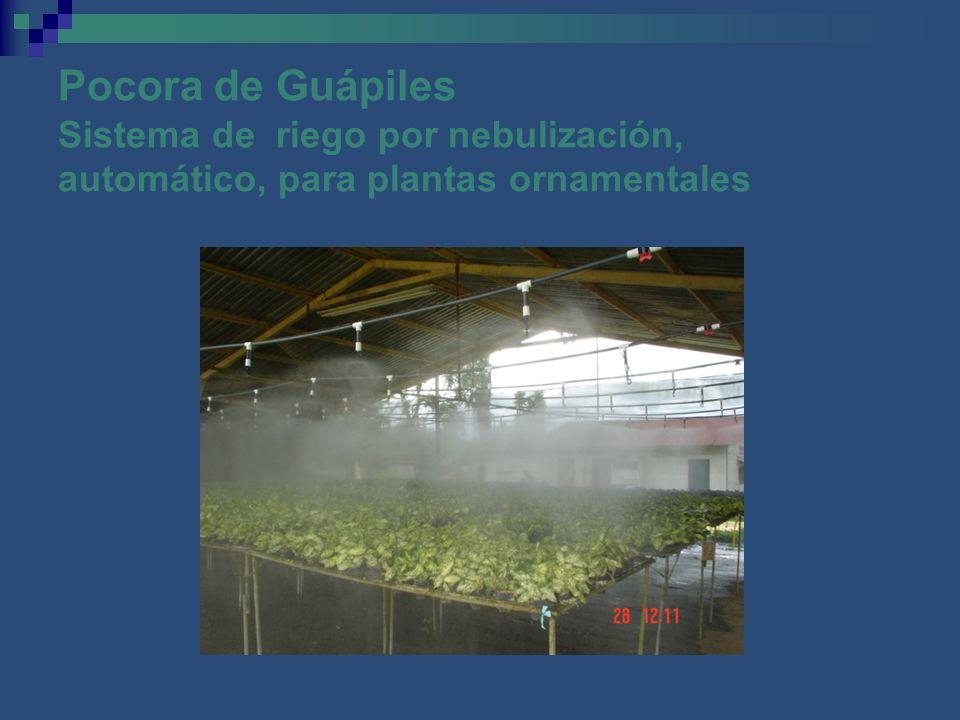 Pocora de Guápiles Sistema de riego por nebulización, automático, para plantas ornamentales