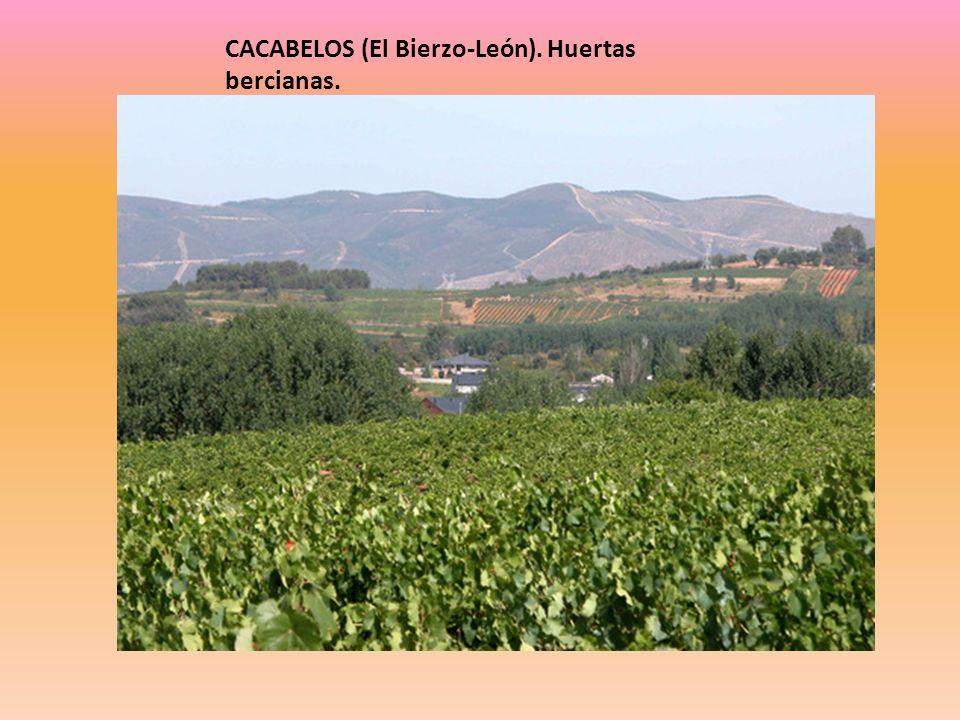 CACABELOS (El Bierzo-León). Huertas bercianas.