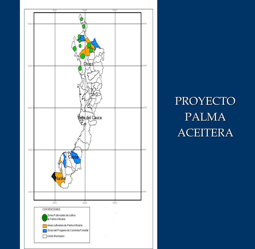 PROYECTO PALMA ACEITERA