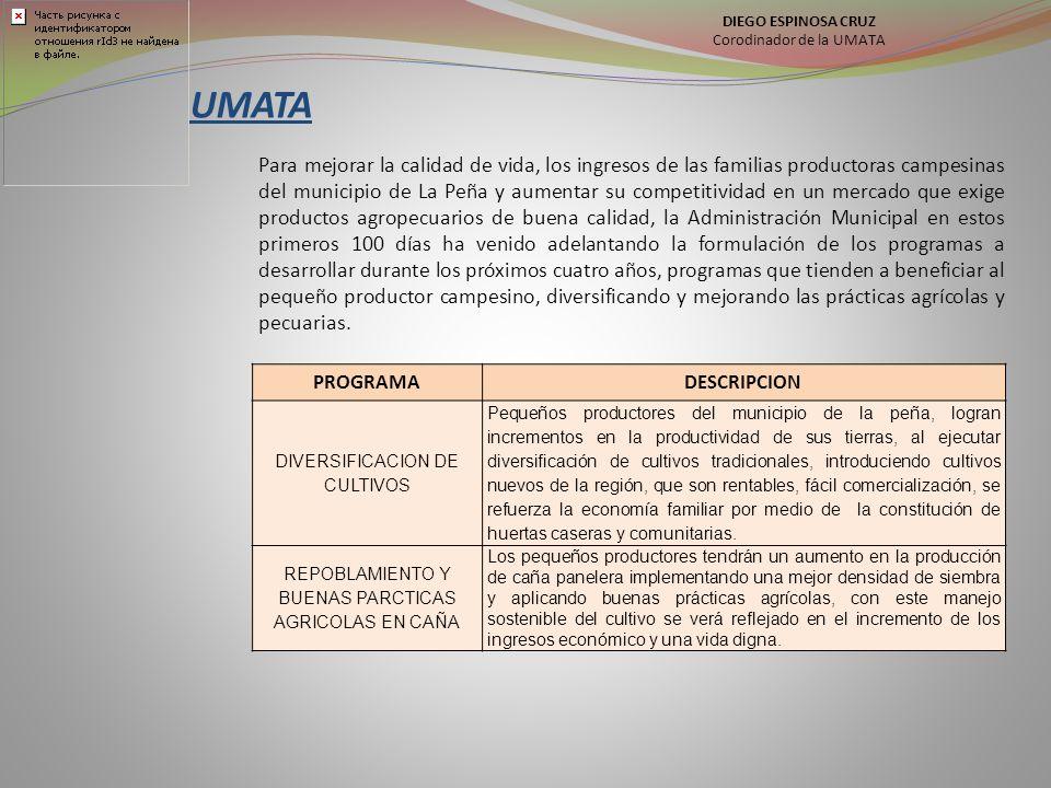 DIEGO ESPINOSA CRUZ Corodinador de la UMATA. UMATA.