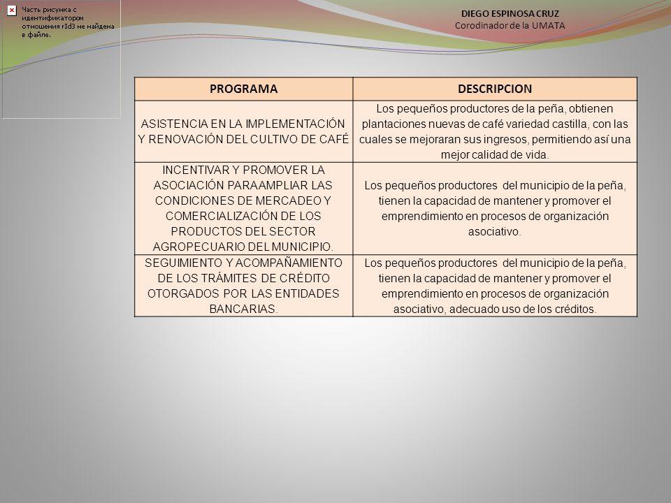 DIEGO ESPINOSA CRUZ Corodinador de la UMATA. PROGRAMA. DESCRIPCION. ASISTENCIA EN LA IMPLEMENTACIÓN Y RENOVACIÓN DEL CULTIVO DE CAFÉ.