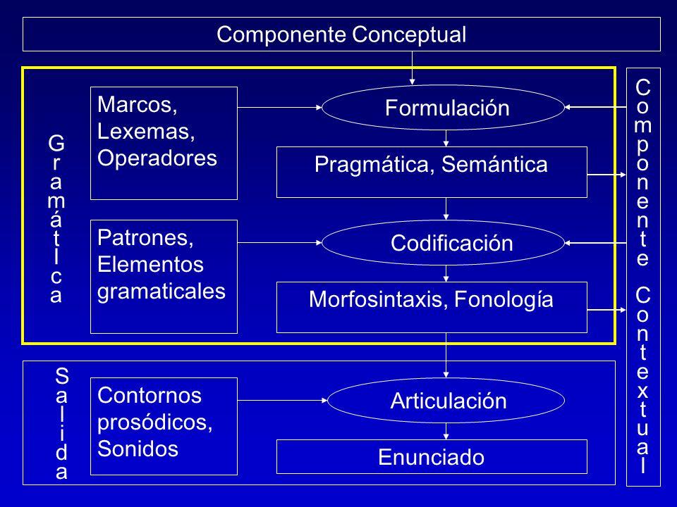 Componente Conceptual