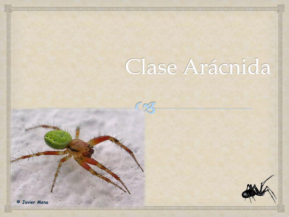Clase Arácnida