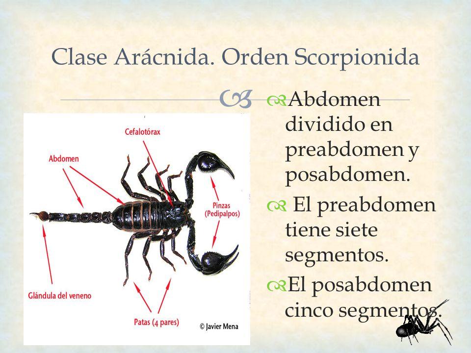 Clase Arácnida. Orden Scorpionida
