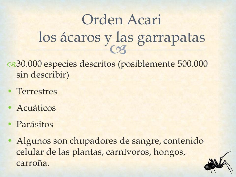 Orden Acari los ácaros y las garrapatas