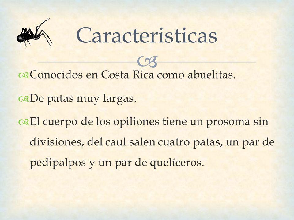 Caracteristicas Conocidos en Costa Rica como abuelitas.