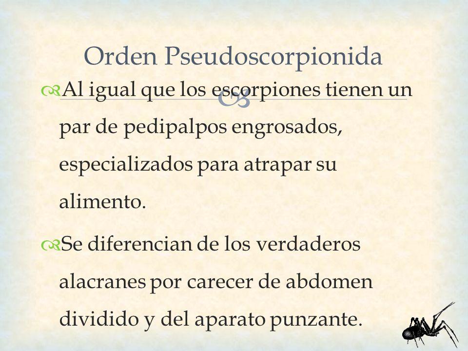 Orden Pseudoscorpionida