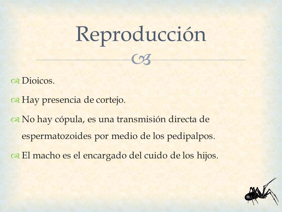 Reproducción Dioicos. Hay presencia de cortejo.