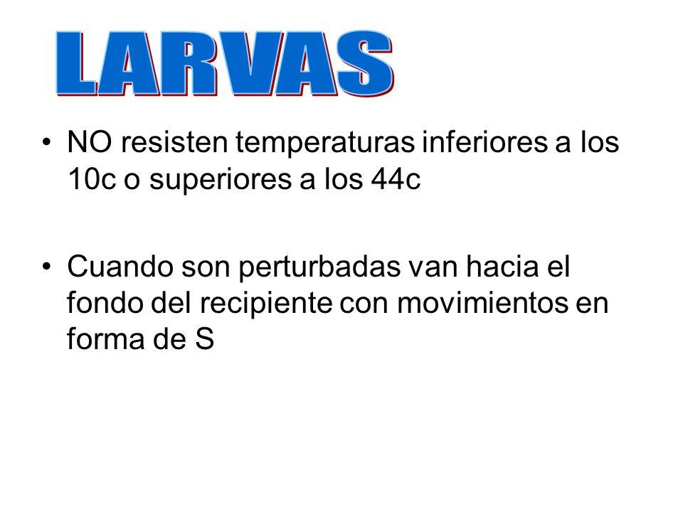 LARVAS NO resisten temperaturas inferiores a los 10c o superiores a los 44c.
