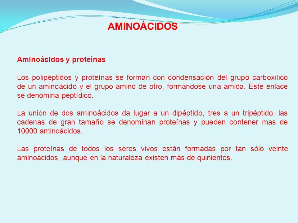 AMINOÁCIDOS Aminoácidos y proteínas