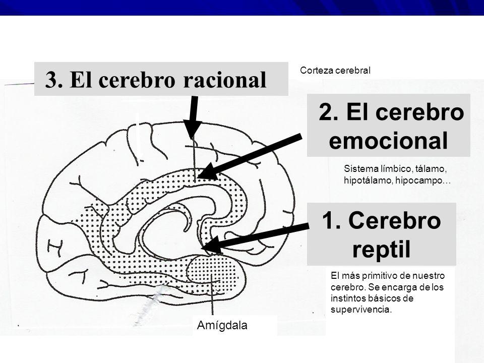 2. El cerebro emocional 1. Cerebro reptil