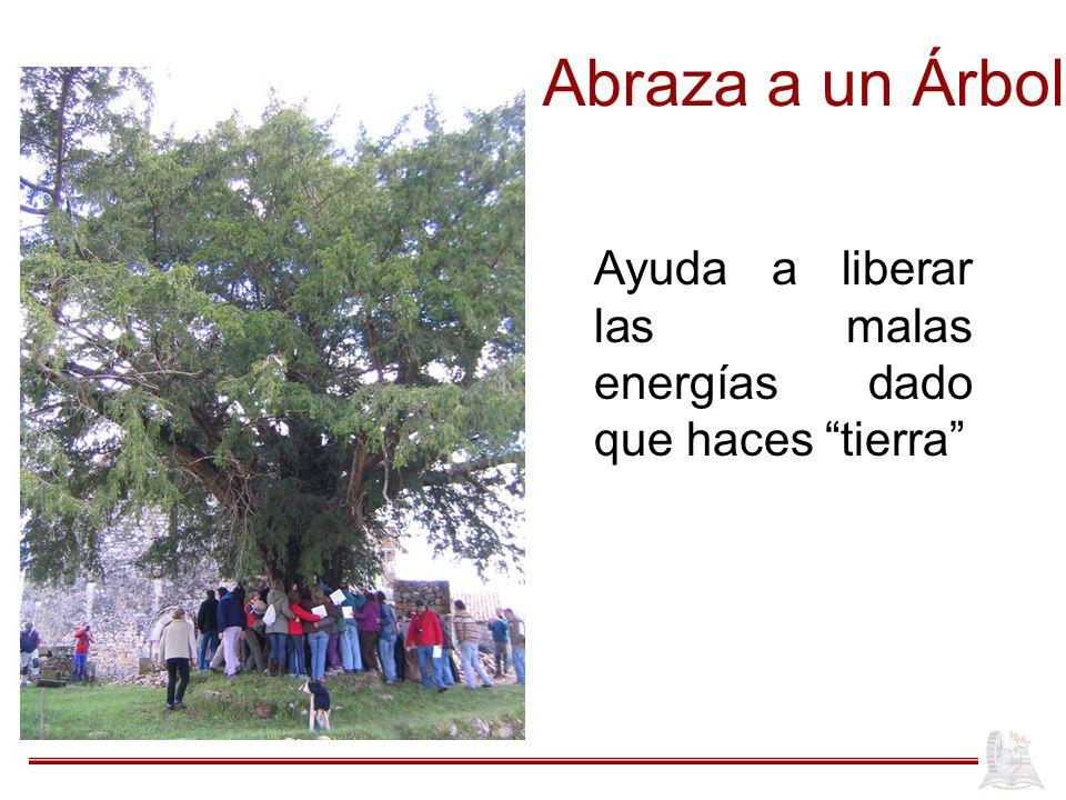Abraza a un Árbol Ayuda a liberar las malas energías dado que haces tierra