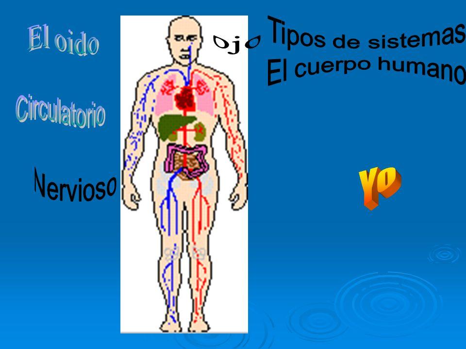 Tipos de sistemas El cuerpo humano Yo El oido ojo Circulatorio
