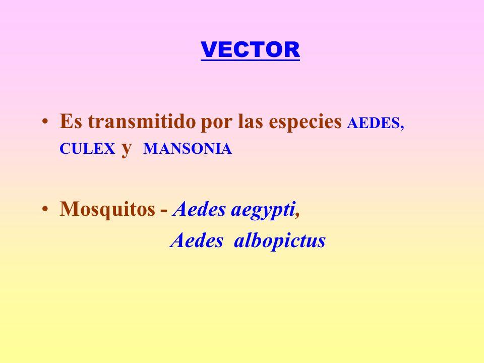 VECTOR Es transmitido por las especies AEDES, CULEX y MANSONIA.
