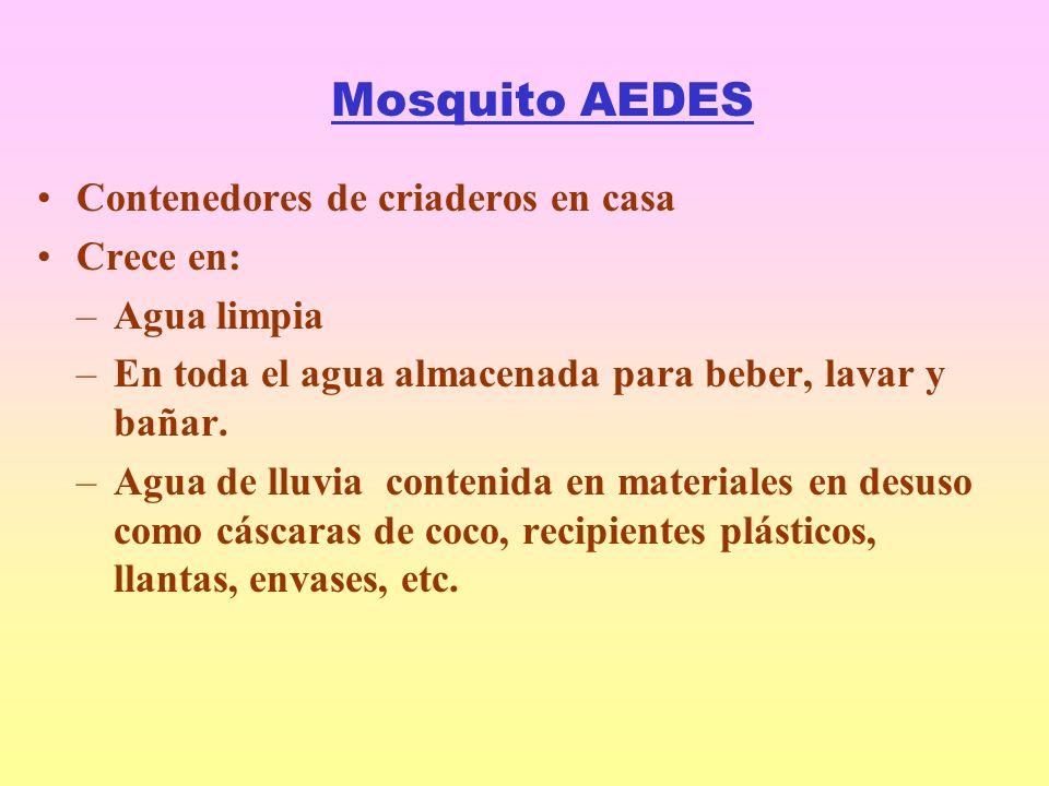 Mosquito AEDES Contenedores de criaderos en casa Crece en: Agua limpia