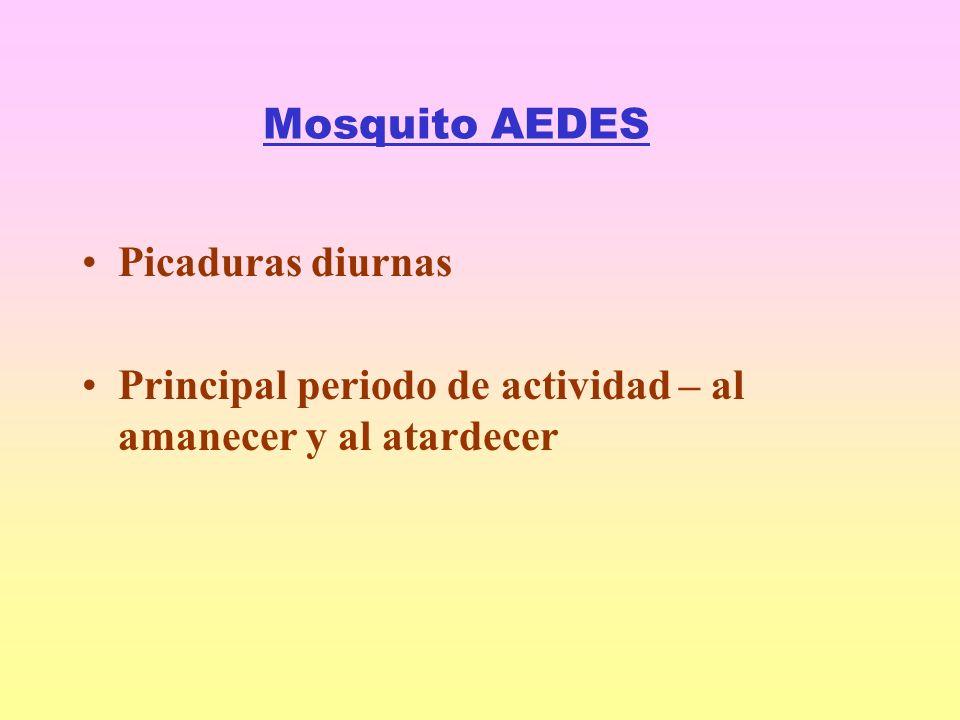 Mosquito AEDES Picaduras diurnas Principal periodo de actividad – al amanecer y al atardecer