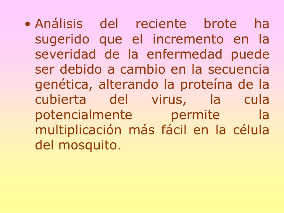 Análisis del reciente brote ha sugerido que el incremento en la severidad de la enfermedad puede ser debido a cambio en la secuencia genética, alterando la proteína de la cubierta del virus, la cula potencialmente permite la multiplicación más fácil en la célula del mosquito.